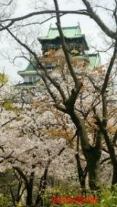 大阪城 西の丸庭園での花見
